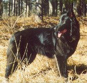 Epix Black Gryphon, from our first Epix litter